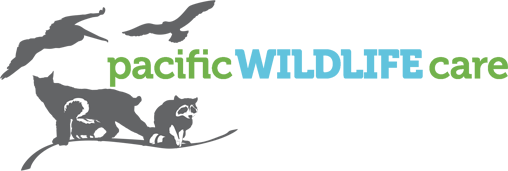Pacific Wildlife Care