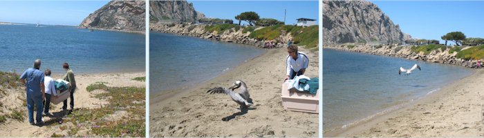 Series of Pelican release photos