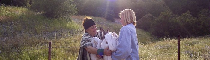 Volunteers rescue fawn
